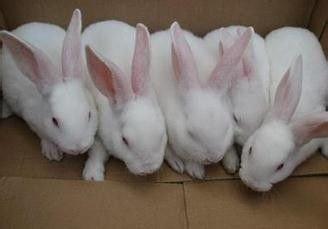 幼兔为什么不好养活